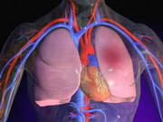 Исследование сосудов легких