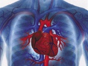 Диагностика заболеваний сердечно-сосудистой системы