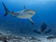 Cквален из акульего жира